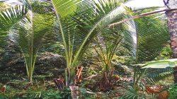 DPRP Ingatkan Pemerintah Tekan Laju Deforestasi Lahan Sagu